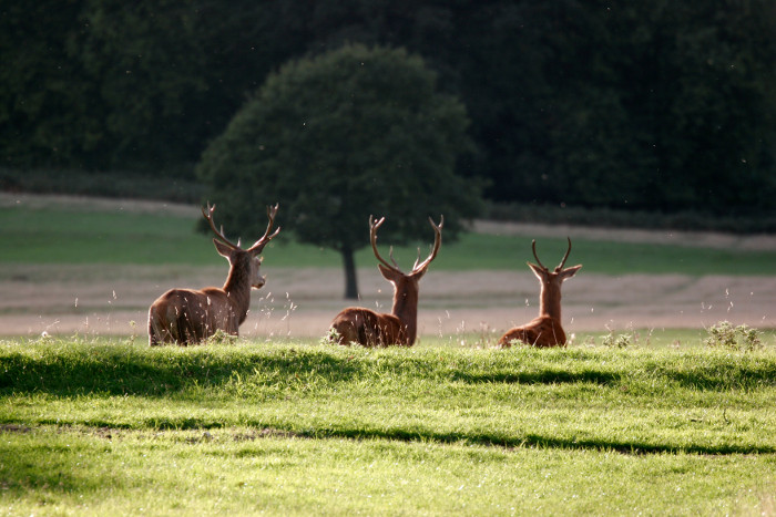 richmond-park-wikipedia
