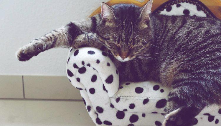 [Top 8] Bezpłatny hotel dla kotów i przyjazny ich opiekunom