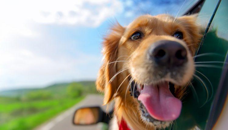 Wakacje z psem – gdzie wyjechać w 2019 roku?