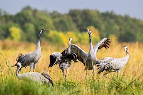 Warto zwiedzić Park Narodowy Hortobágy