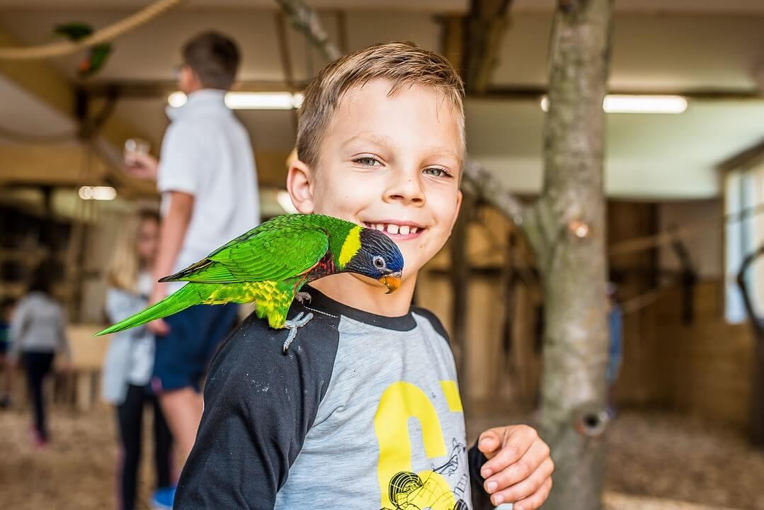 Fajne wczasy dla rodzin - Papugarnia w Zakopanem / źródło: www.egzotyczne-zakopane.pl