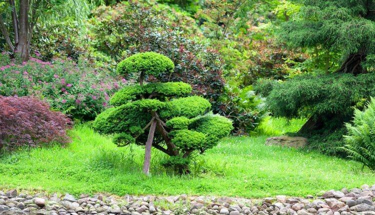 Ogród japoński - majówka we Wrocławiu
