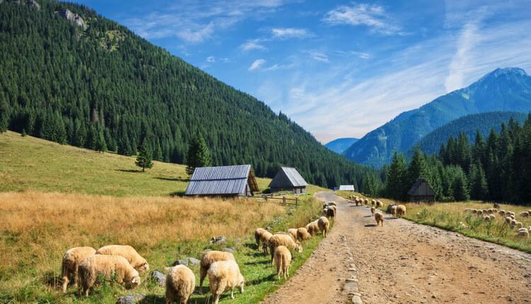 Szlaki górskie Tatry i okolice, czyli gdzie wybrać się z plecakiem